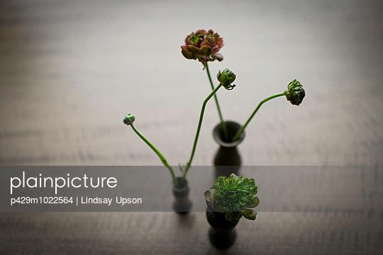 Still life of three small vases of cut flowers