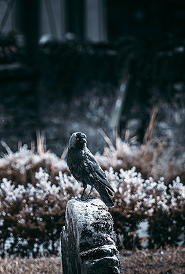 Bird on a stone - p1681m2283413 by Juan Alfonso Solis