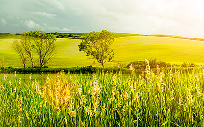 Tuscany landscape with rushes and shining su - p968m987197 by roberto pastrovicchio