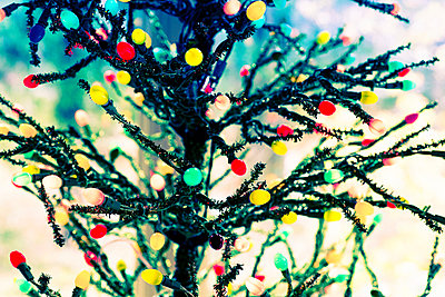 Artificial Christmas tree - p1086m953573 by Carrie Marie Burr