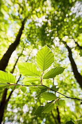Grüne Blätter im Wald - p464m2186073 von Elektrons 08