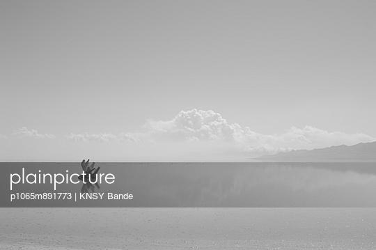 Ein Elch schwimmt durch einen See - p1065m891773 von KNSY Bande
