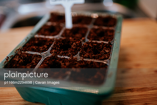 Close up of seed starter for garden prep - p1166m2294698 by Cavan Images