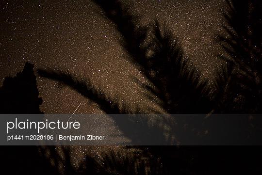 Silhouette einer Pflanze - p1441m2028186 von Benjamin Zibner