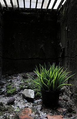 Pflanze steht Unterirdisch - p045m1028308 von Jasmin Sander