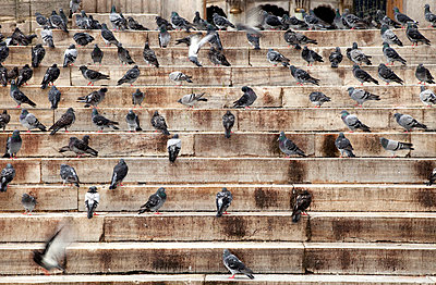 Doves on stairs - p3820271 by Anna Matzen