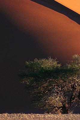Namib - p1065m885974 von KNSY Bande