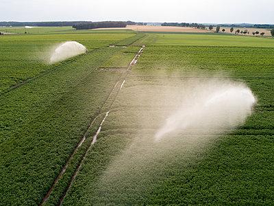 Künstliche Bewässerung im Kartoffelanbau - p1079m2157728 von Ulrich Mertens