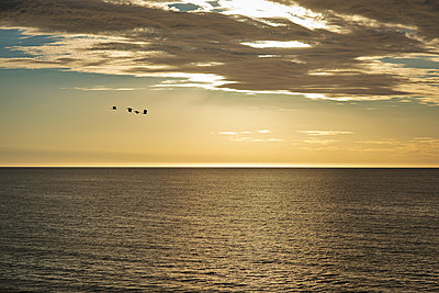Birds over ocean - p1125m1042658 by jonlove