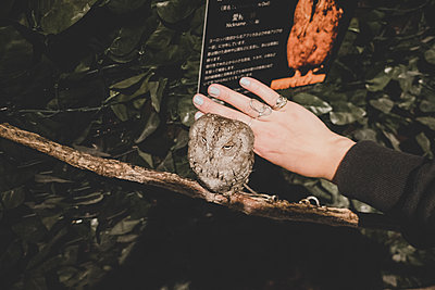 Stroking a owl - p1345m2055583 by Alexandra Kern