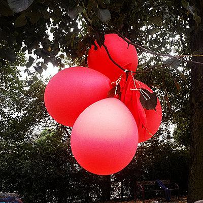 Rote Ballons an einem Baum - p627m1035910 von Christian Reister