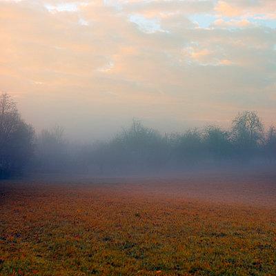 Nebelschleier - p6470112 von Tine Butter