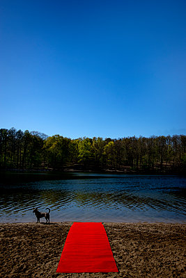 Roter Teppich am See mit Hund - p1212m1134660 von harry + lidy