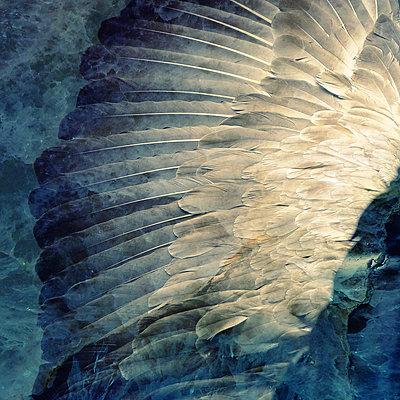 Wings II - p1633m2295268 by Bernd Webler