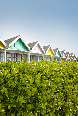 Beach hut roofs seen above hedge - p597m2077110 by Tim Robinson