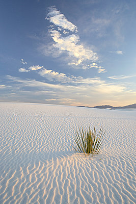 Yucca growing in rippled sand, White Sands National Monument, New Mexico, United States of America, North America - p871m1073290f by James Hager