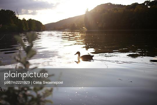 Coucher de soleil sur la Meuse 03 - p987m2221929 by Célia Swaenepoel