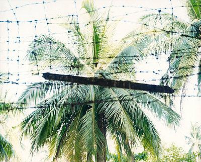 Palmen - p1205m1021047 von Simone Casetta