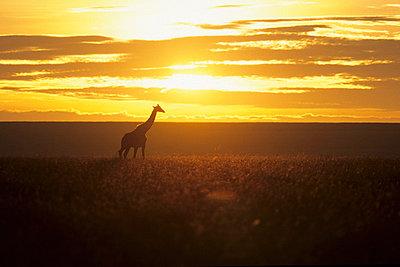 Nationalpark Afrika  - p3300413 von Harald Braun