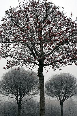 Baeume im Herbst - p9792077 von Jaeckel