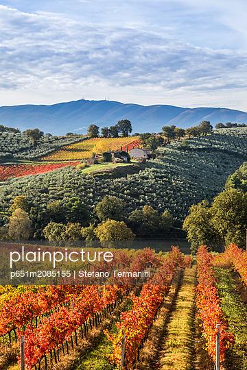 Sagrantino vineyards during autumn, Montefalco, Perugia province, Umbria, Italy - p651m2085155 by Stefano Termanini