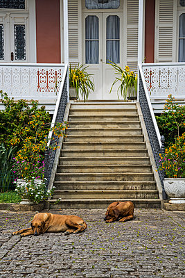 Two dogs in front of a house - p1170m1090773 by Bjanka Kadic