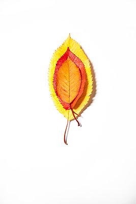 Herbstblätter übereinander - p1248m1185568 von miguel sobreira