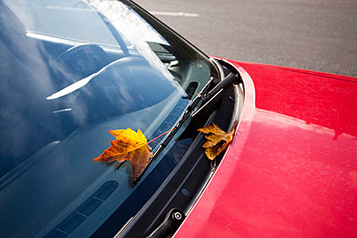 Leaf on Windshield of Red Car - p555m1452941 by Spaces Images