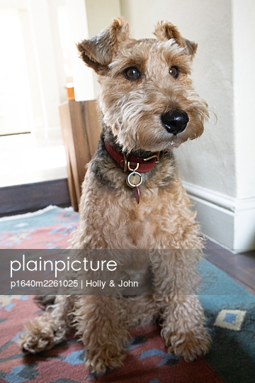 Portrait of a terrier - p1640m2261025 by Holly & John