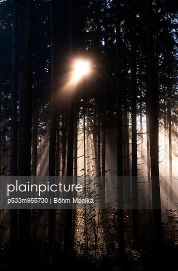 Sonnenstrahlen im Fichtenwald - p533m955730 von Böhm Monika
