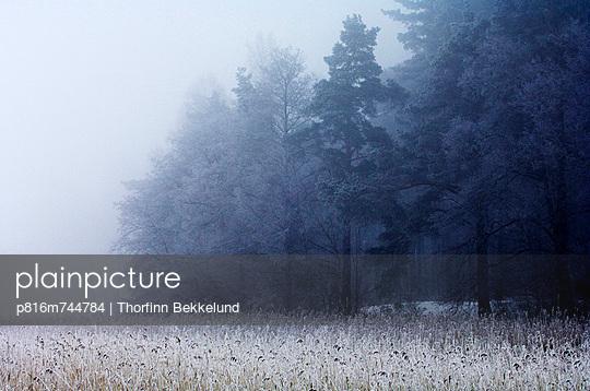 p816m744784 von Thorfinn Bekkelund