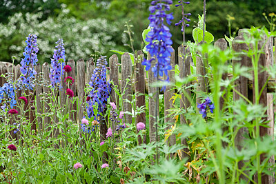 Lupines and other summer flowers - p1685m2272485 by Joy Kröger