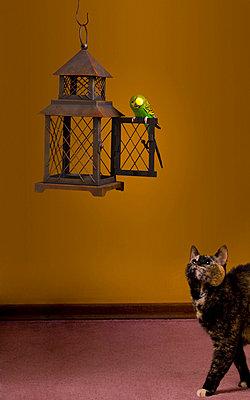 Cat Eyeing Budgie - p44210861f by Corey Hochachka