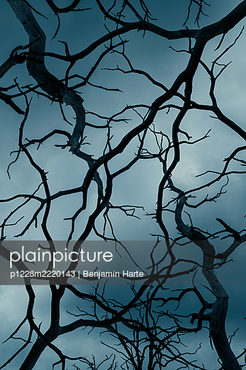 Complicated creepy branches - p1228m2220143 by Benjamin Harte