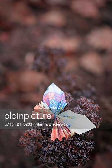 Butterfly, folded money - p715m2173238 by Marina Biederbick