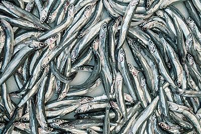 Silver fishes - p1093m855415 by Sven Hagolani