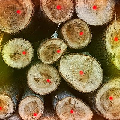 Logs - p300m1008473f by Roman Märzinger
