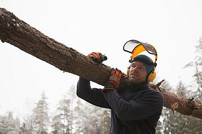 Logger carrying log, Tammela, Forssa, Finland - p429m1418259 by Tiina & Geir