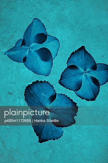 Blütenblätter   - p450m1172655 von Hanka Steidle