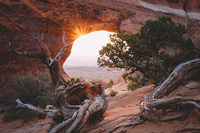 Juniper Trees framed by Partition Arch at Sunrise - p1166m2246426 by Cavan Images
