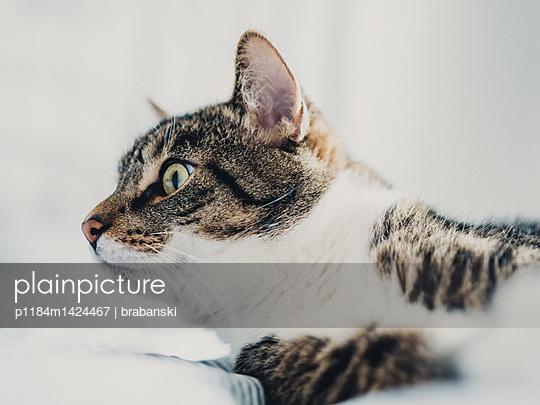 Tomcat watching curiously - p1184m1424467 by brabanski
