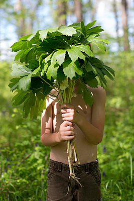 Boy with Mayapples - p1169m1463432 by Tytia Habing