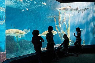 Children watching fish in aquarium - p9243228f by Image Source