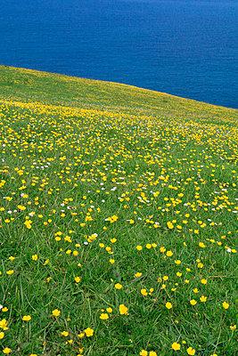 Yellow carpet, Port Isaac - p977m934744 by Sandrine Pic