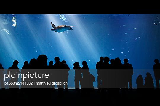Menschen im Aquarium - p1553m2141582 von matthieu grospiron