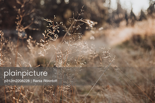 p312m2208228 von Rania Rönntoft