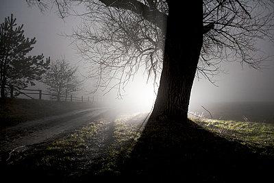 Spot light - p075m1115706 by Lukasz Chrobok