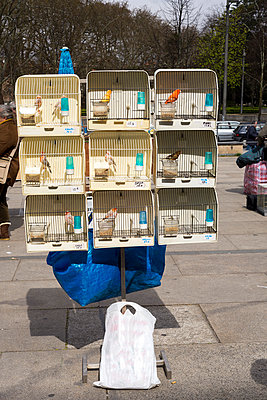 Birdcages, Porto - p1201m1008157 by Paul Abbitt