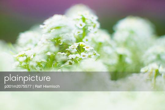 p301m2075577 von Ralf Hiemisch