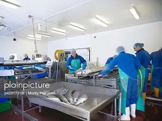 Workers in fish processing plant - p42917318f by Monty Rakusen